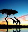 """Набор """"Яркая Африка"""""""