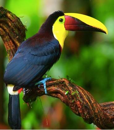 Коста-Рика Тарразу